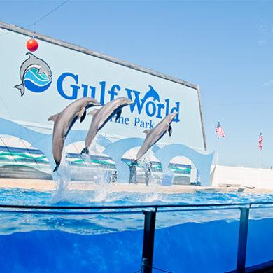 gulf world Panama City